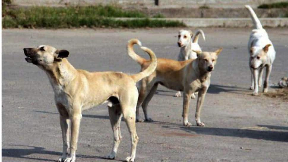 A life cut short, dreams shattered by stray dogs in Mathura village