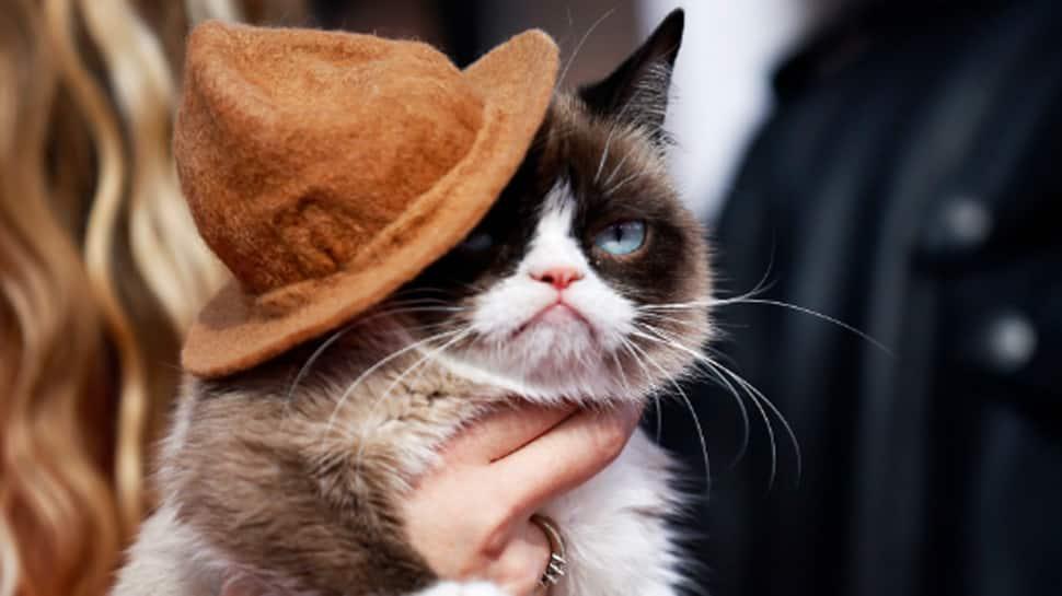 Grumpy Cat, whose scowl launched a million memes, dies age 7