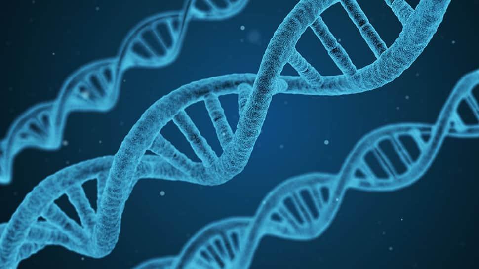 Gene experiment foolish and dangerous: Experts