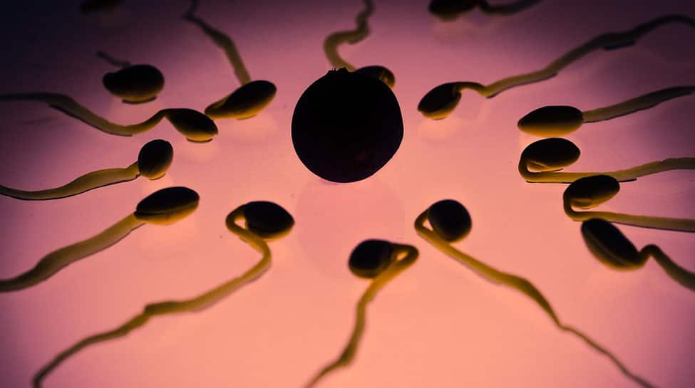 'Secret handshake' detected between sperm and uterus
