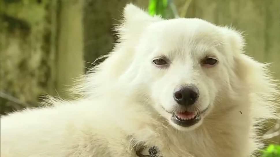 Kerala: Owner dumps adorable dog over 'illicit relationship' with neighbourhood pooch