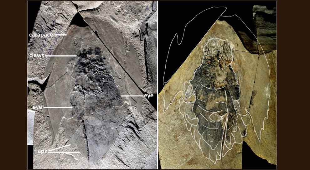 Hundreds of fossils of mysterious primordial predator, with head resembling 'Star Wars' spaceship, unearthed
