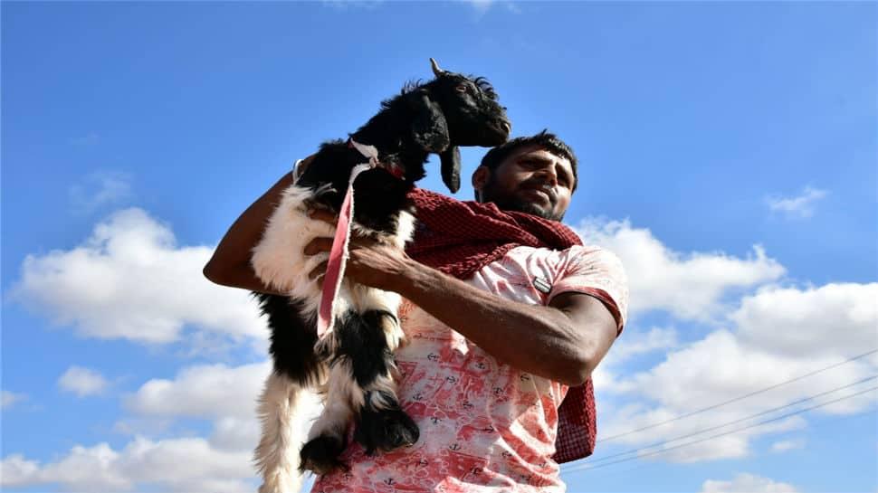 Despite Bombay HC's order, animals sacrificed in many places in Mumbai on Eid-al-Adha