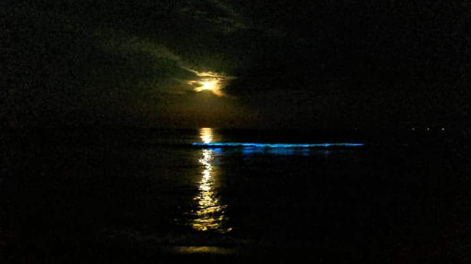 'Blue glow' in Chennai beaches: A microscopic look at what caused it