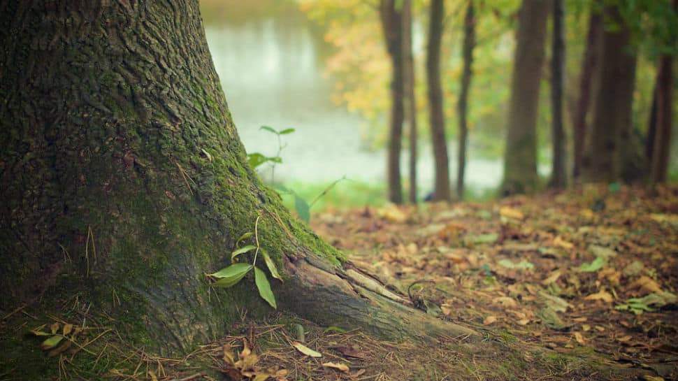 Imphal man quits job, dedicates 18 years to plant 300-acre forest