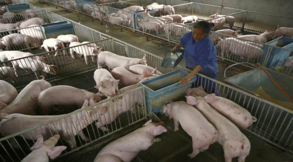 Philippines declares African first swine fever outbreak near Manila