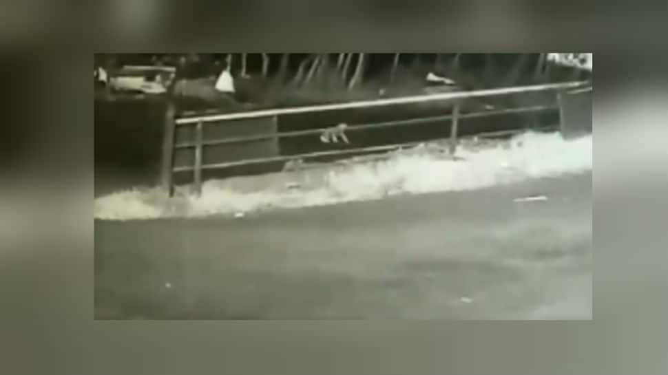 Watch: Toddler falls off from moving car in Kerala forest, crawls to checkpost