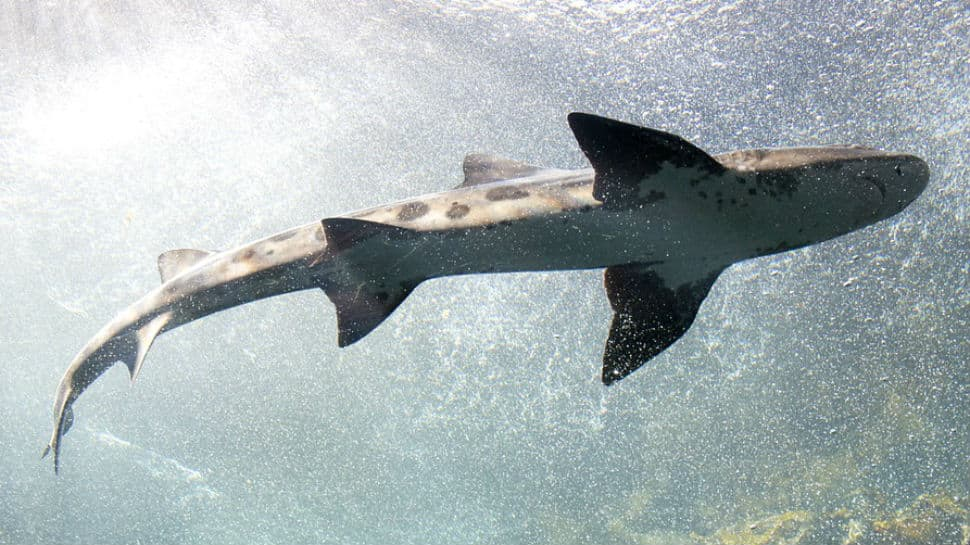 Great white shark attacks seal in horrifying video, tourists scream in terror