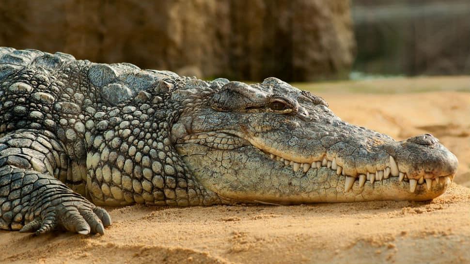 Researchers identify prehistoric crocodile