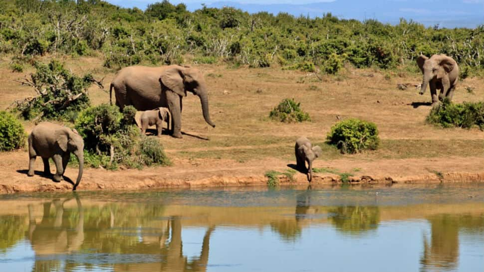 Concerned baby elephant rushes to river to rescue man. Watch viral video