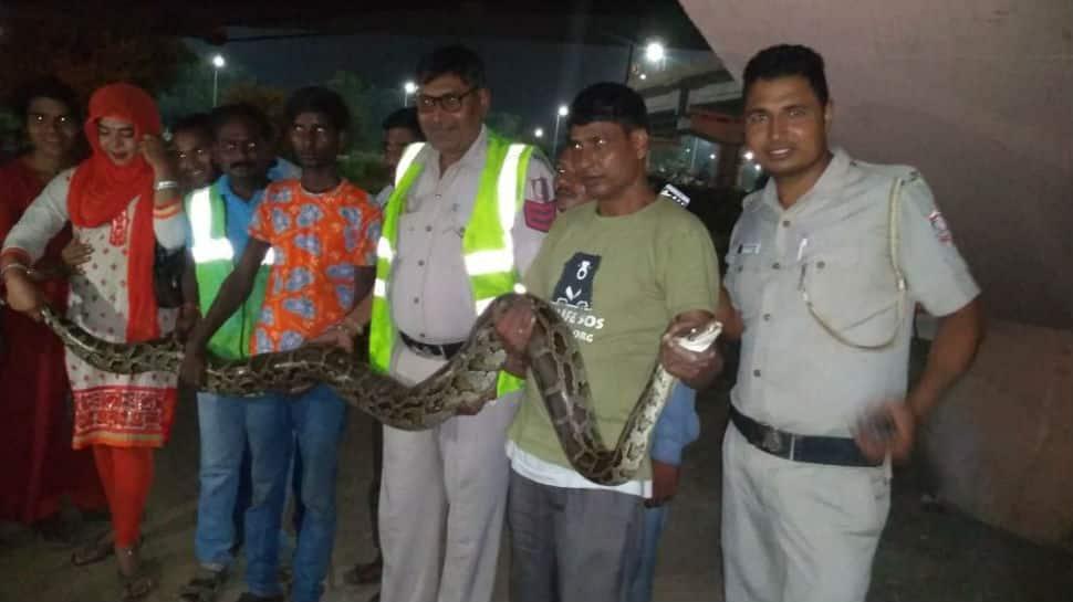 10-foot-long python rescued in Delhi