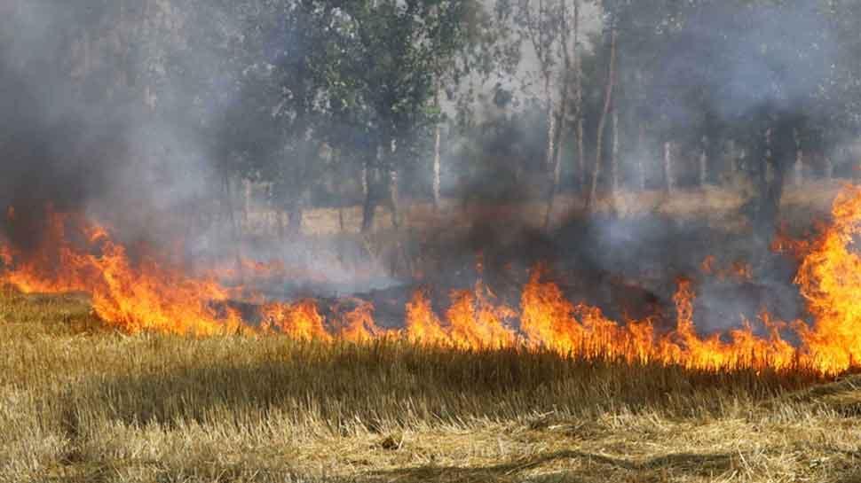 Stubble burning: NGT seeks Action Taken Report from Uttar Pradesh, Haryana, Punjab