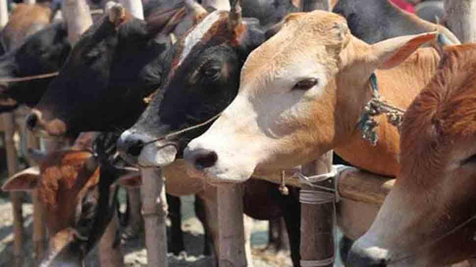 Cow urine, cow dung may cure Coronavirus: BJP MLA Suman Haripriya tells Assam assembly