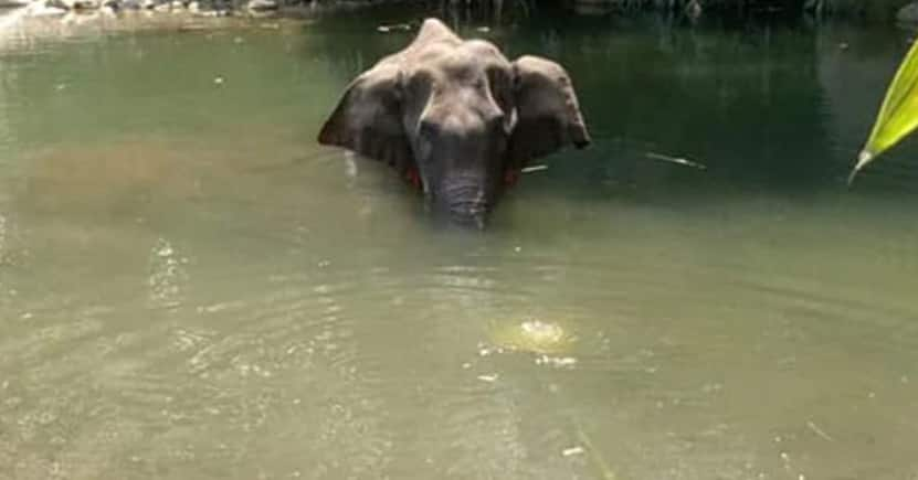 Horrific: Bollywood and TV celebs mourn Kerala elephant who died after being fed cracker-stuffed fruit