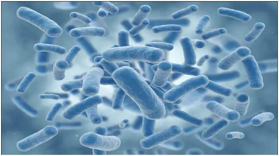 Good gut bacteria may help reduce the risk of heart disease: Study