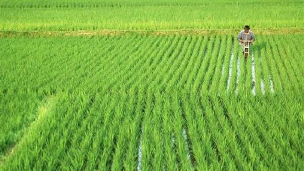 FM announces Rs 65,000-cr fertilizer subsidy for farmers in Aatmanirbhar 3.0