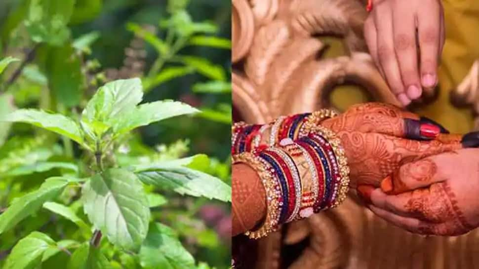 Tulsi Vivah 2020: Date, Puja time and significance