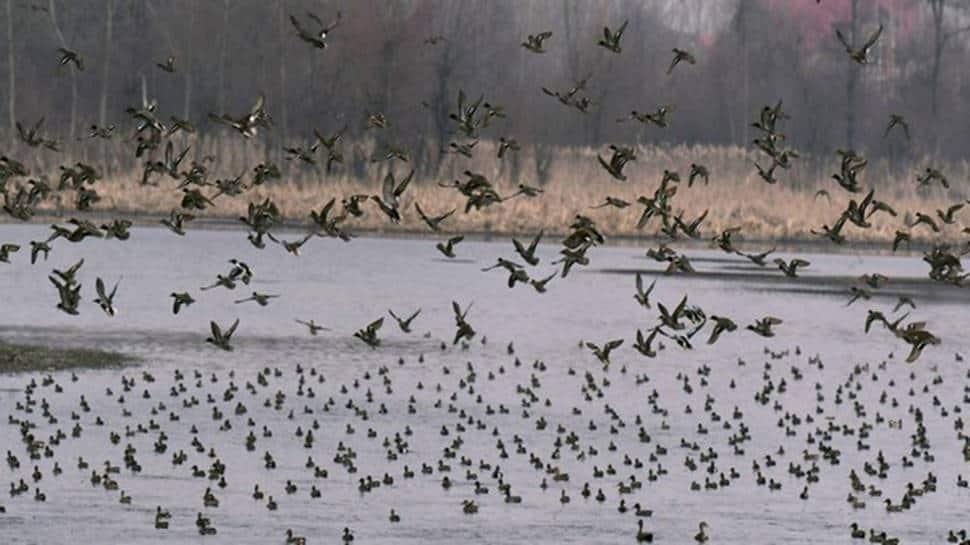 Bird flu scare: Over 30 crows, 10 ducks found dead across Delhi, samples collected