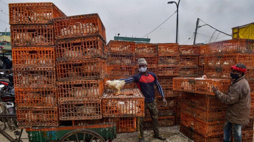 Avian Influenza: More cases confirmed in Rajasthan, Uttar Pradesh, Himachal Pradesh, Madhya Pradesh