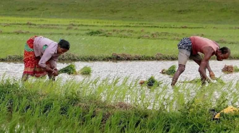 Budget 2021: Industry experts seek additional funds, incentives for agriculture sector