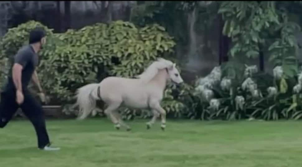 MS Dhoni follows Ziva's pony in wild race, Suresh Raina reacts – WATCH