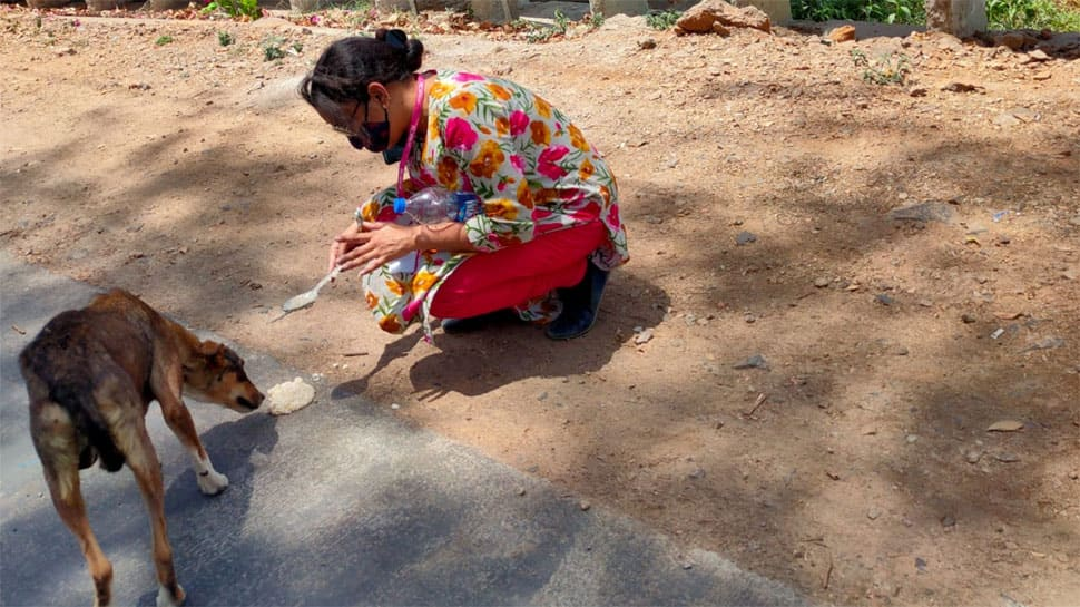 Meet Dr Mala Mattha from Rajasthan who feeds more than 1,000 animals daily in the COVID-19 era