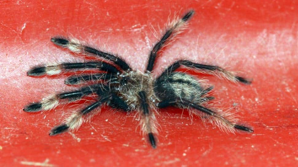 Chennai customs picks parcel with 107 live spiders, cargo to be sent back to Poland