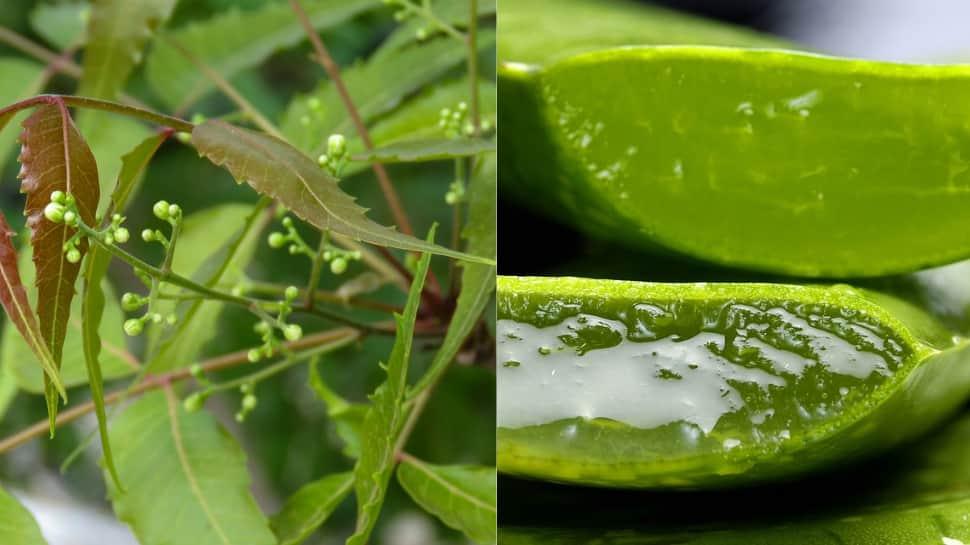 Use Neem and Aloe Vera this monsoon season for flawless skin