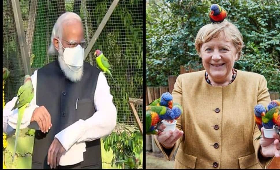 Angela Merkel with birds or PM Modi