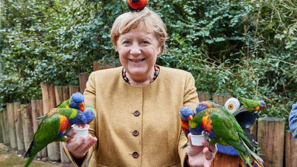 Angela Merkel's birds memes