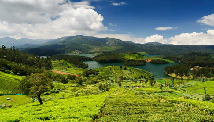 Tea plantations around Emerald Lake, Ooty. Thinkstock photograph, For representational puposes only