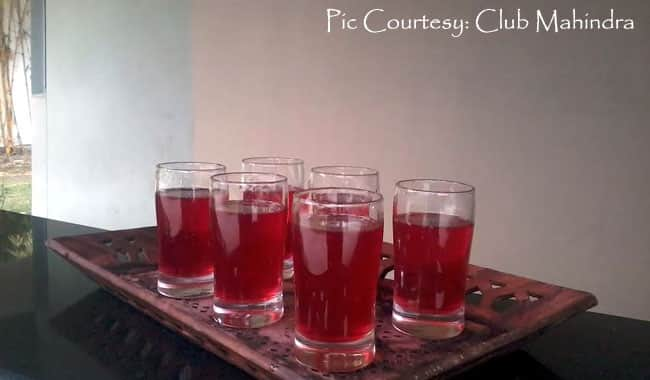 Buransh - Delicious, intoxicating rhododendron juice from