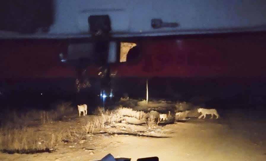 lions gujarat, lions ambulance