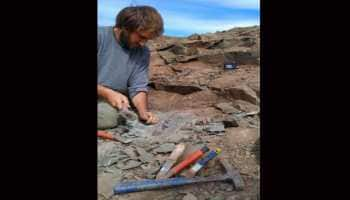 Fossils of 'extraordinary hunter dinosaur' megaraptors discovered in Argentina