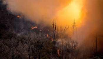 Largest California wildfire threatens marijuana-growing area
