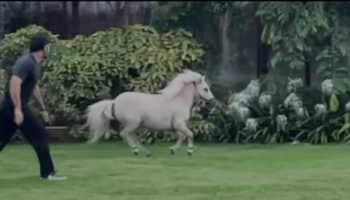 MS Dhoni follows Ziva's pony in wild race, Suresh Raina reacts - WATCH