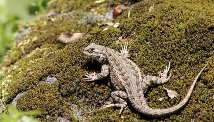 Reptiles can learn through imitation