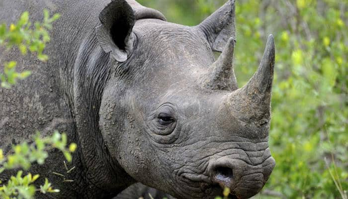 Scientists hold emergency meeting to save endangered rhinos