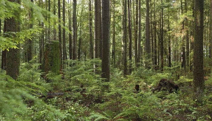 Forests can empower communities and reverse climate change: Experts