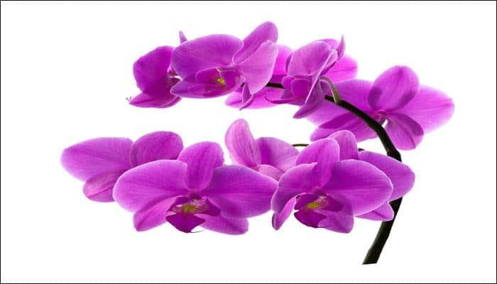 Orchids join endangered species list