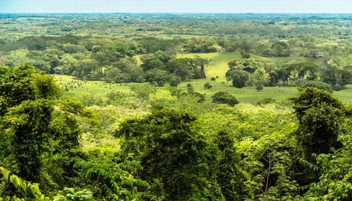 How ancient Maya activity led to environmental decline