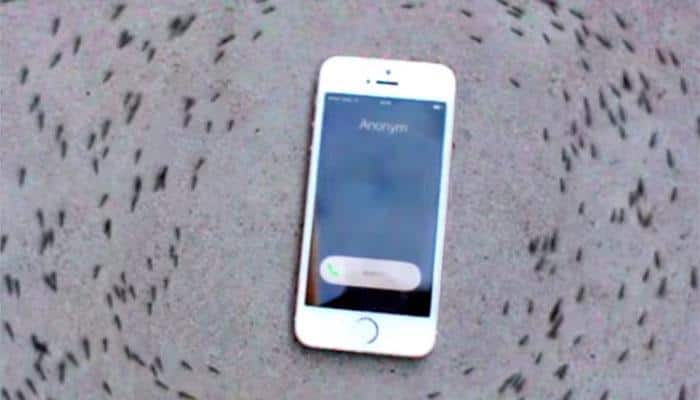Watch: Why does an iPhone ringtone make ants run in a circle?