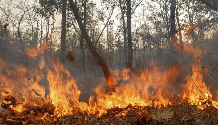 Indonesia to take action over forest fires