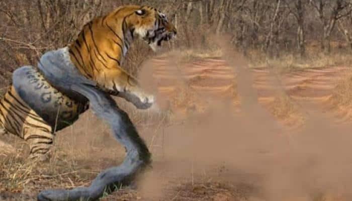 Tiger vs Great Anaconda: The epic battle goes viral on social media!