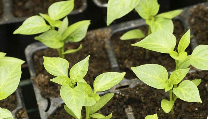 Global plant growth not keeping pace with CO2 emissions