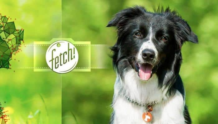 Watch: Microsoft's new Fetch app can identify breeds from photos of dogs