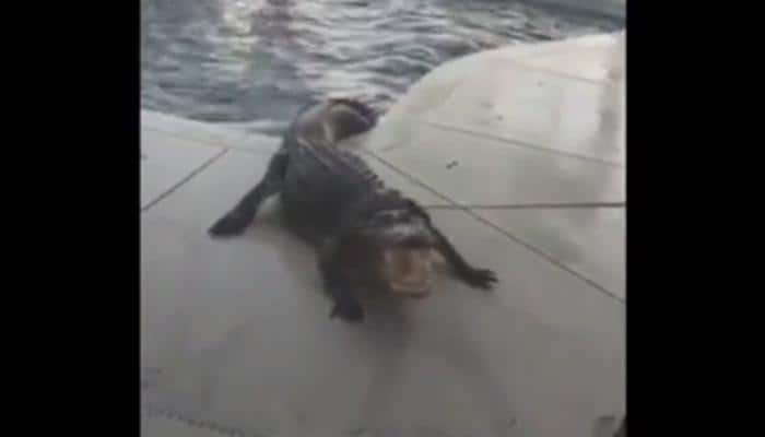 What happened when a Florida family found 9-foot, 300-pound alligator in family's pool – Video