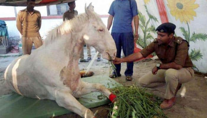 Police horse Shaktimaan, which was hit by BJP MLA, is recovering fast