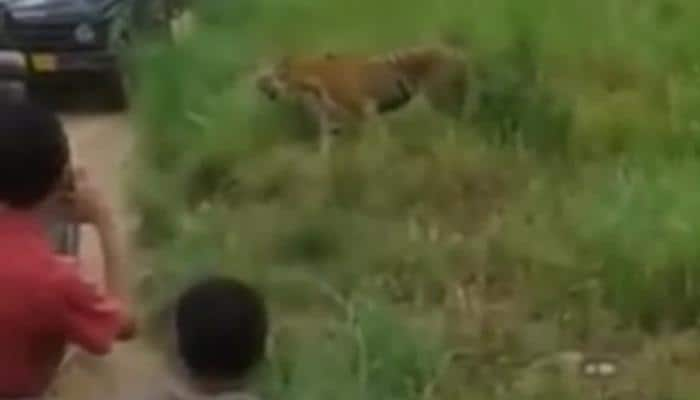 Tourists block tiger's path in Corbett: Watch video