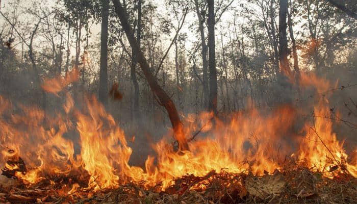 Trikuta hills fire brought under control, Katra-Vaishno Devi chopper services resume